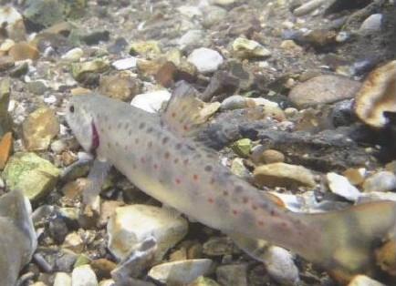 couverture guide poissons du bassin Artois Picardie