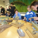 découverte des poisson du bassin Artois-Picardie
